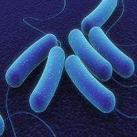Điểm danh những loại vi khuẩn cực có lợi cho con người