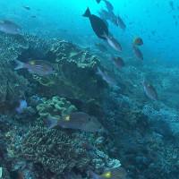 Loài cá nhiệt đới di cư về vùng cực vì biến đổi khí hậu