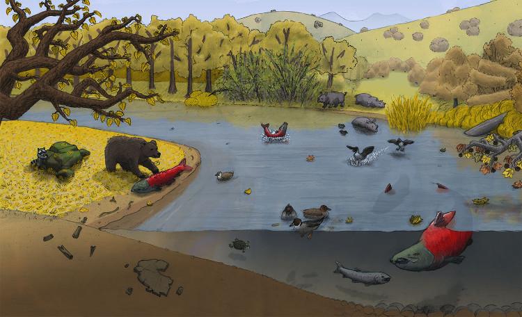 Hình ảnh con gấu đã bắt được cá hồi khổng lồ sống cách đây khoảng 5 đến 11 triệu năm.