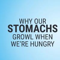 Vì sao bụng phát ra tiếng kêu khi đói?