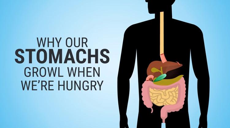 Tiếng kêu được phát ra do sự chuyển động của các cơ bắp trong hệ tiêu hóa bao gồm dạ dày, ruột non và ruột già.