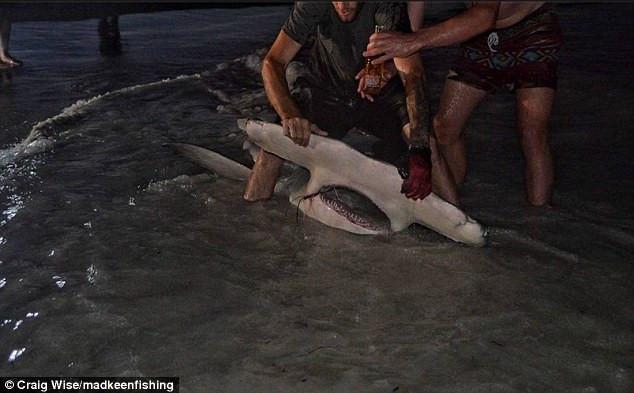 Họ đã phải vật lộn trong 90 phút để kéo con cá lên bờ.