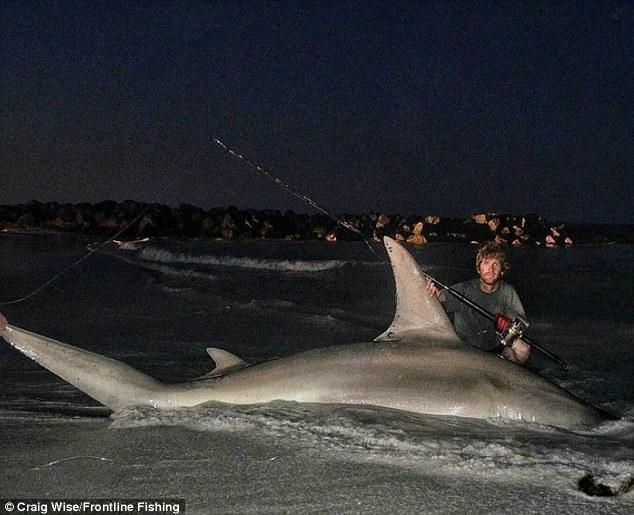 Con cá mập khổng lồ câu được ở Úc.