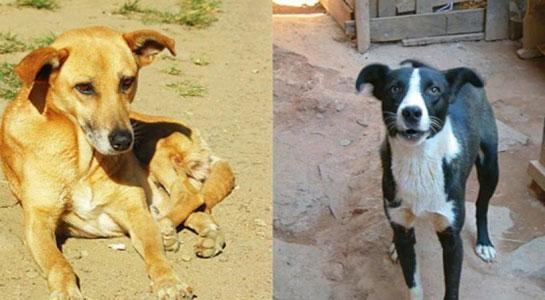 Các mẫu ADN đã cho thấy khả năng của chó trong việc tiêu hóa tinh bột ngay từ hồi xa xưa.