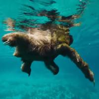 Những video gợi nhớ bạn rằng tự nhiên đẹp tới mức nào
