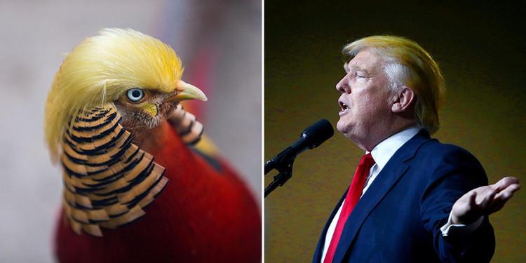 So sánh sự giống nhau giữa hai kiểu tóc.