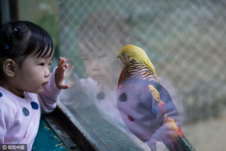 Bé gái đang ngắm nhìn chú chim nổi tiếng.