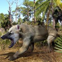Tìm hiểu về loài gấu chó đã tuyệt chủng trong lịch sử