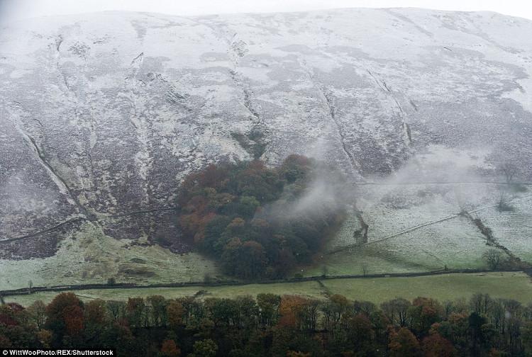 Tuyết bao phủ rừng cây ở Tebay, Cumbria, Anh.