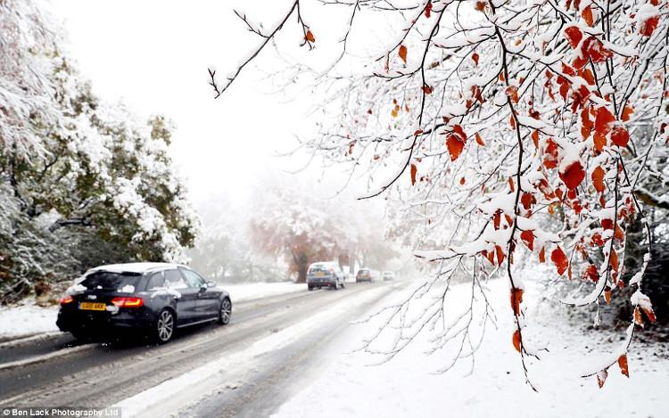 """Những hàng cây """"đóng băng"""" hai bên đường Leeds, Anh, trong giờ cao điểm buổi sáng."""