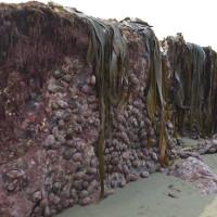 Động đất kéo đáy biển lên cao 2m ở New Zealand