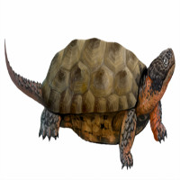 Rùa răng có thể tồn tại từ hơn 100 triệu năm trước