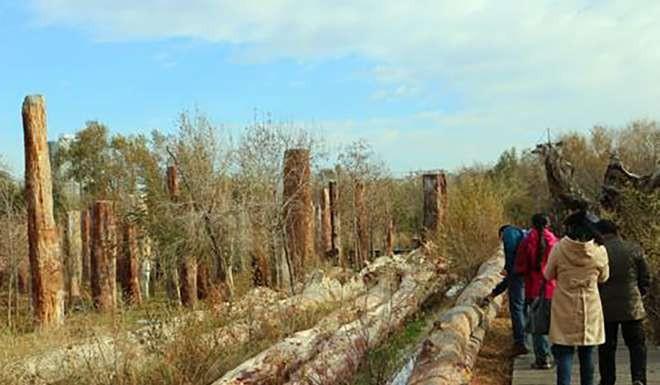 Phần gỗ hóa thạch được tìm thấy tại Vườn quốc gia Tân Cương Cổ đại, dự kiến sẽ vượt qua kỷ lục hiện nay dài 38m.