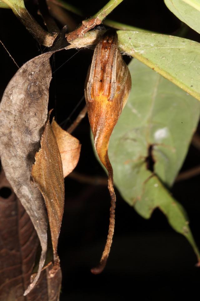 Loài vật này thực ra lần đầu được tìm thấy vào năm 2011.