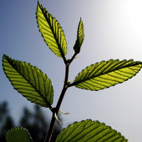 Phát triển thành công hợp chất hấp thụ CO2 nhanh hơn cây cối