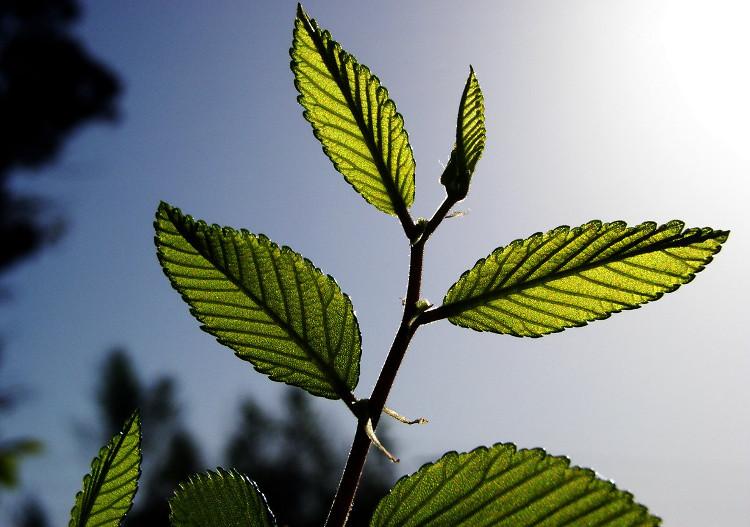 Một nhóm nghiên cứu tại Đức đã phát triển một hệ thống tổng hợp nhằm biến CO2 trở thành các hợp chất hữu cơ.