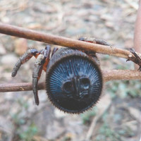 Nông dân Trung Quốc tìm thấy nhện cổ đại quý hiếm