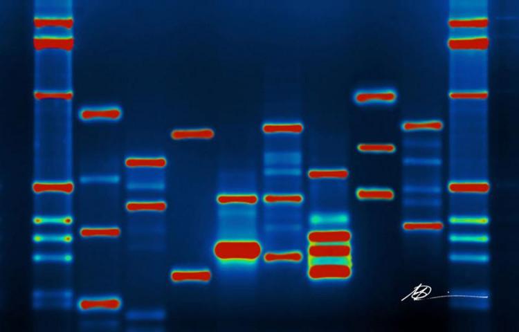 Chúng ta đang ở giữa điểm bùng nổ của công nghệ chỉnh sửa gene