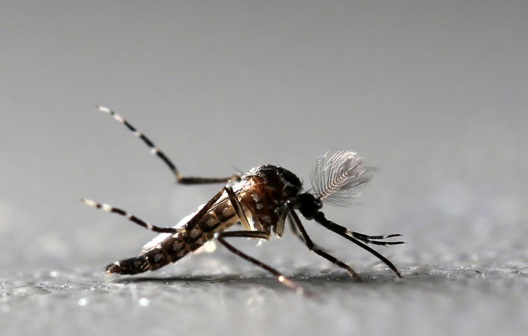 Mục tiêu lớn hơn của chúng ta là xóa sổ bệnh sốt rét.