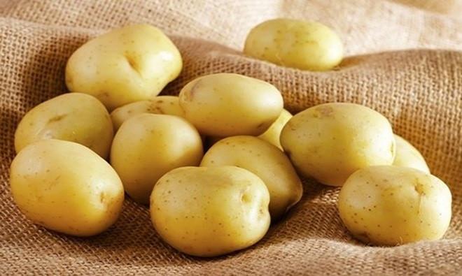 Hiện nay, khoảng 10% số khoai tây trong các cửa hàng bán thực phẩm ở Mỹ là khoai tây biến đổi gene.