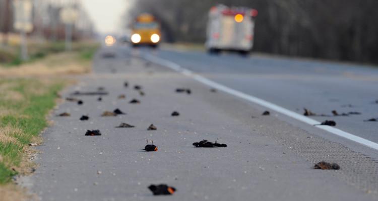 Theo ước tính, hơn 5.000 con chim đen tại một thị trấn nhỏ ở bang Arkansas (Mỹ) đã chết hàng loạt và rơi hàng loạt xuống từ bầu trời