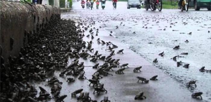 Một sự kiện lạ xảy ra trên thế giới đó là khi trời mưa không có nước mà thay vào đó từ trên trời rơi xuống những con ếch.