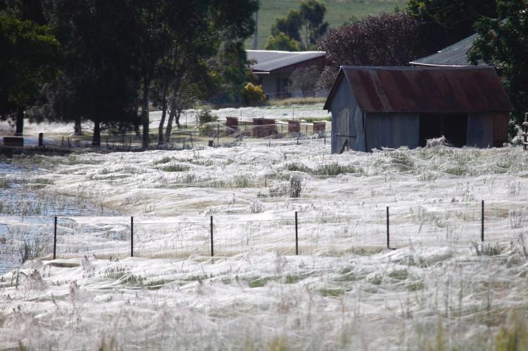 Năm 2012, một cơn mưa nhện xảy ra ở miền Nam Australia gây xôn xao dư luận.