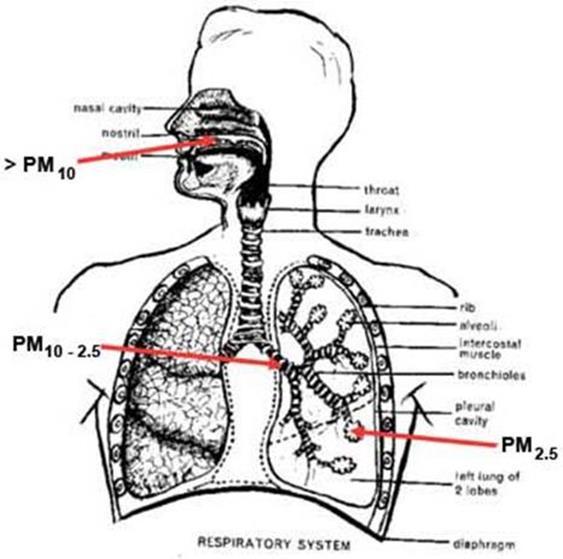 Chỉ tiêu ô nhiễm không khí PM 2.5.
