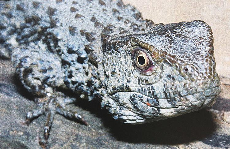 Dù là loài hiếm nhưng theo các chuyên gia Viện Sinh thái và Tài nguyên sinh vật, chúng ít được nghiên cứu.