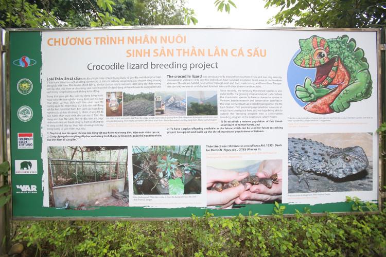 Trên thế giới, loài này chỉ còn ở Trung Quốc khoảng 1.000 con, Việt Nam còn trên 100 con