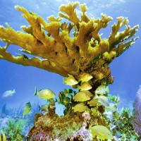 San hô là loài động vật sống thọ nhất Trái đất