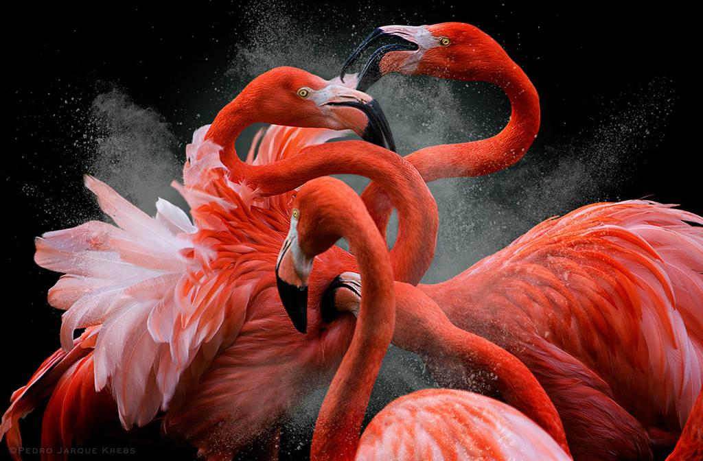 4 con chim hồng hạc dường như đang khiêu vũ cùng nhau.