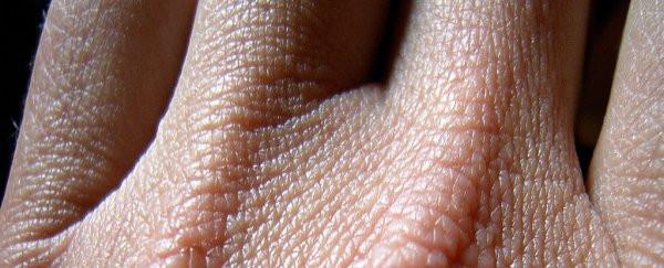Da đào thải hàng triệu tế bào mỗi ngày nhưng lại không để rò rỉ máu hay mồ hôi.