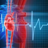 Tại sao tim chúng ta đập nhanh khi thấy nguy hiểm?