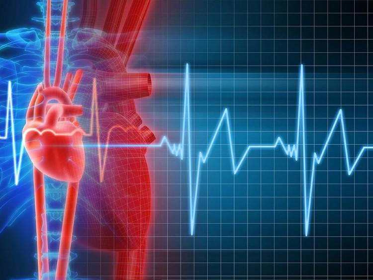 Tim bạn đập nhanh hơn, không chỉ đẩy máu xung quanh, mà còn chuyển hướng Glucose trong cơ thể.