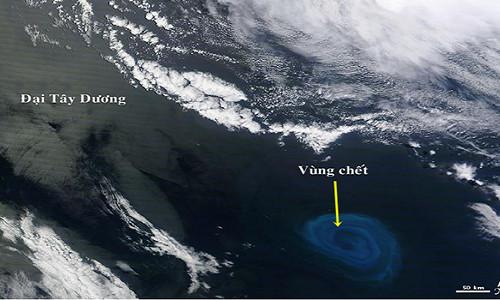 Một vùng biển ngoài khơi bờ biển của châu Phi có đặc điểm thiếu hụt oxy giống như ở vịnh Bengal.