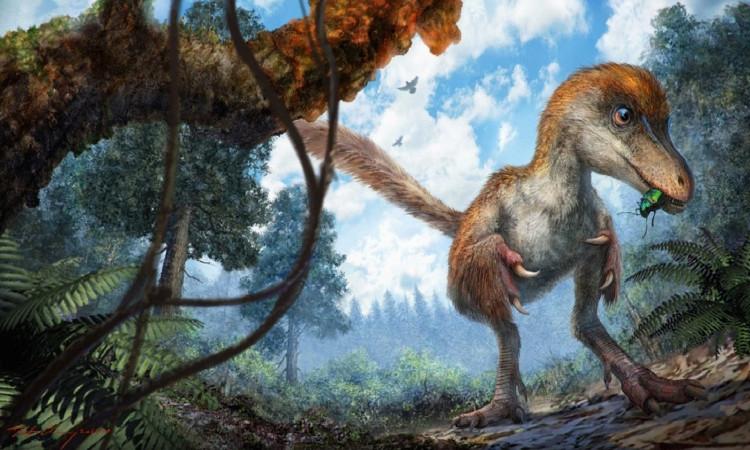 Nhóm nghiên cứu hy vọng có thể tìm thấy nhiều mẫu vật hơn từ khu vực, tăng cường hiểu biết về lông và mô mềm ở khủng long cũng như các loài động vật có xương sống khác.
