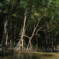 Vẻ đẹp mê hoặc của khu rừng rậm ngay sát Sài Gòn