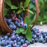 Sử dụng tia plasma khử sạch vi khuẩn trong hoa quả