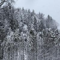 Nga làm chương trình về khả năng sinh tồn ở rừng Taiga, giải thưởng lên tới 36 tỷ VNĐ