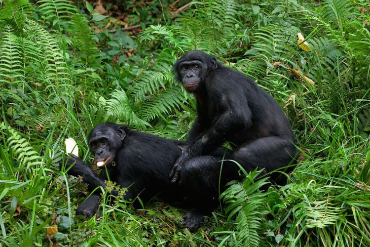 Xương dương vật ở người đã biến mất bởi hệ thống tìm bạn tình của tổ tiên loài người đã thay đổi.