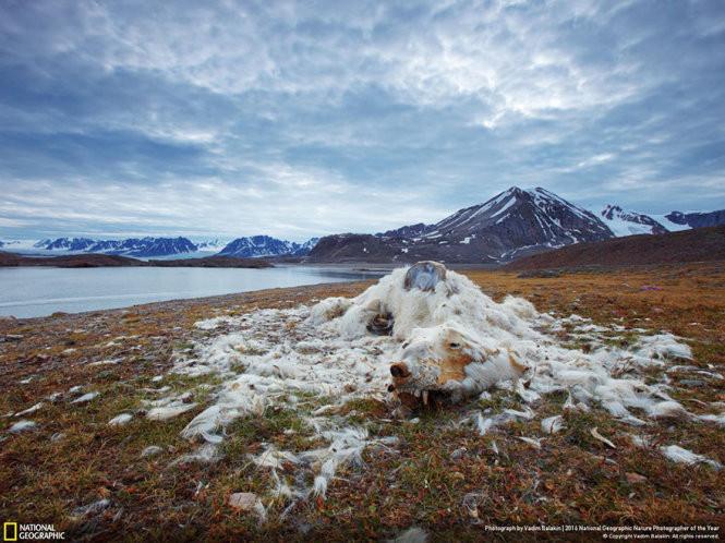 """""""Sống và chết"""", chụp ở Svalbard & Jan Mayen."""