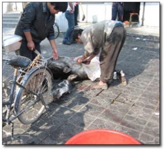 Cách lấy thịt dựa trên biện pháp tra tấn tàn bạo thời cổ đại.