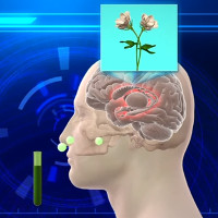 Video: Loại nước hoa ngăn não cảm nhận mùi hôi nhà vệ sinh