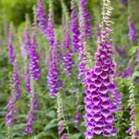Loài hoa tuyệt đẹp, nhưng có thể giết người trong tích tắc