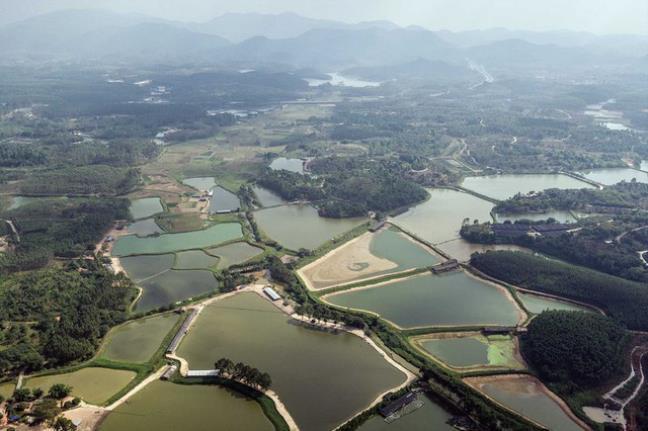 Một khu vực chăn nuôi thủy sản tại Quảng Đông.