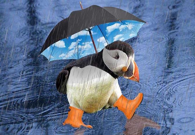 Những cơn mưa phức tạp hơn một chút so với điều chúng ta đã biết.