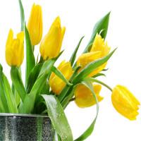 Truyền thuyết và ý nghĩa của hoa Tulip