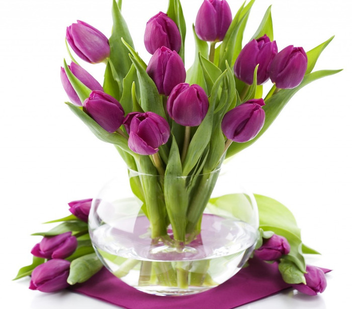 Hoa Tulip hay còn gọi là hoa Uất kim hương.