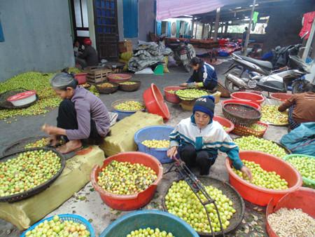 Hàng năm, cứ vào đầu tháng 11 âm lịch, không khí làng Vị, Hưng Yên lại tấp nập hơn hẳn